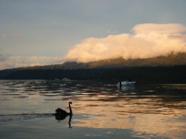 Lake Tarawera peaceful at dawn, North Island